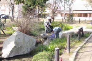 高松桜井高校理学部、太田中央公園での水生生物保全活動