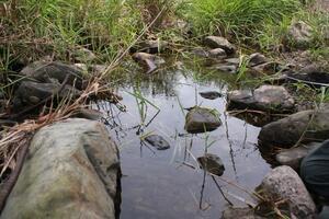 伏流水が湧き出る小規模水域